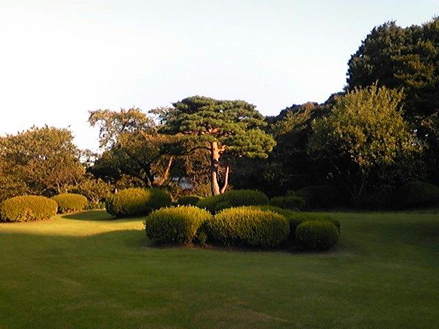 新宿御苑に行ってきました。