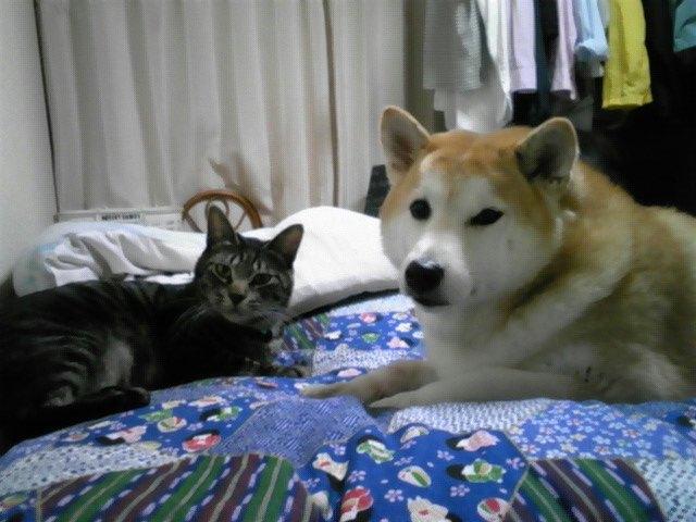 犬も猫も丸くなる〜♪