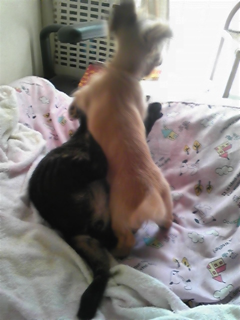 犬猫オペラ。